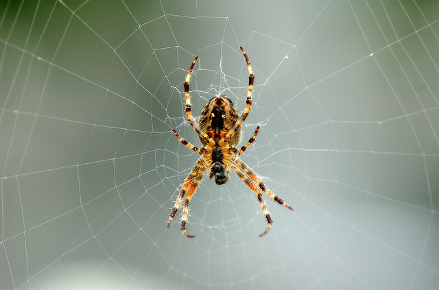 9 astuces pour loigner les araign es de votre maison for Araigne sauteuse maison